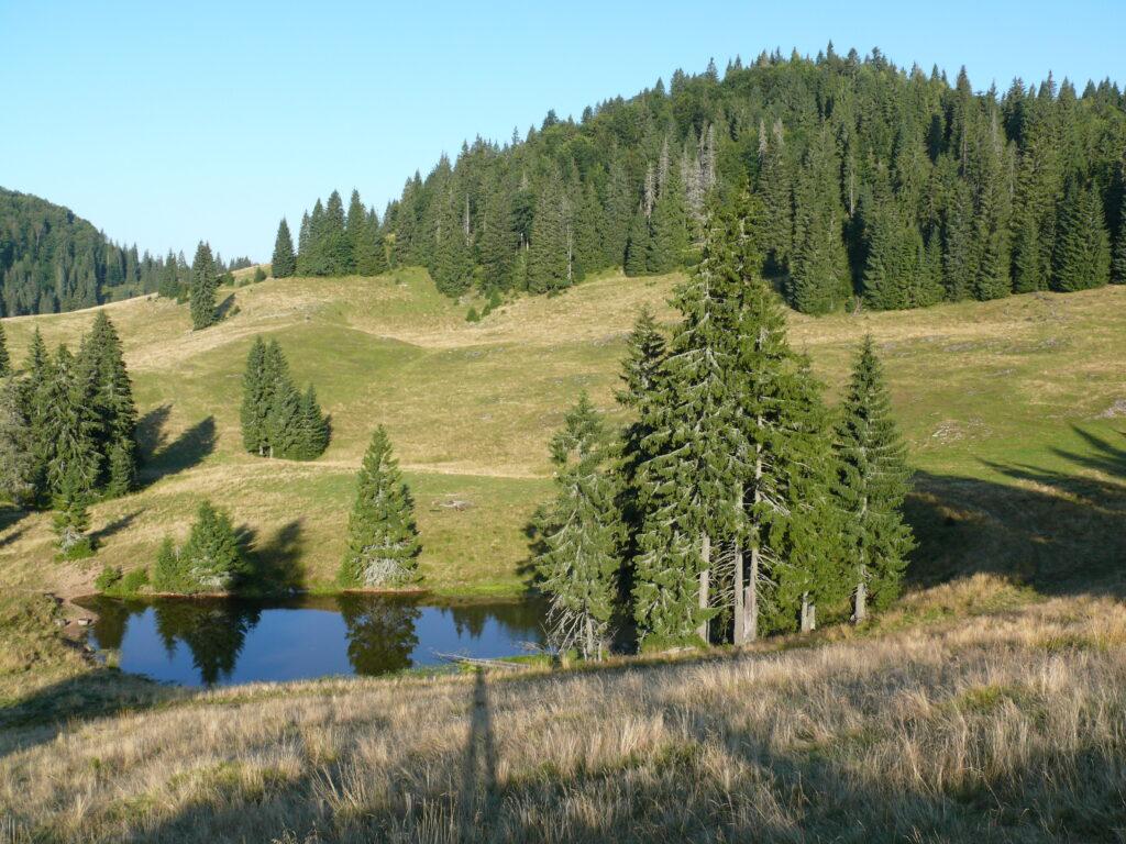 Platoul Padiș - Peisaj