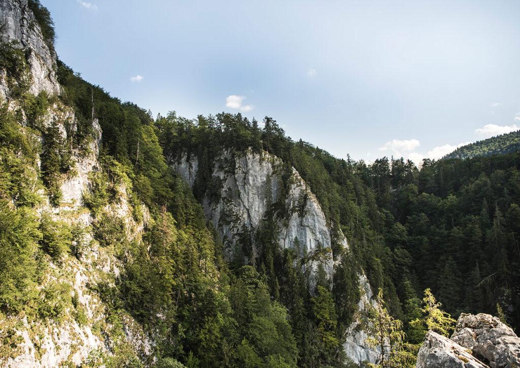 Peisaj - Padurea Craiului toamna